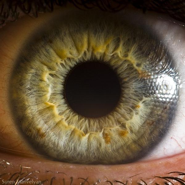 macro-eyes (6)