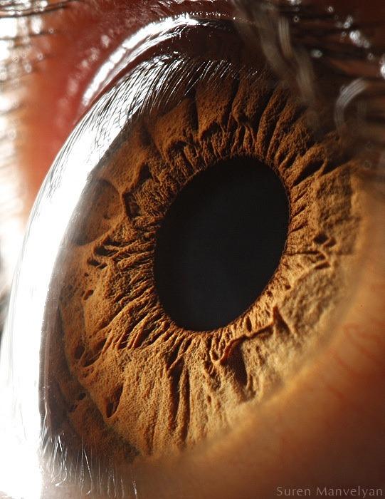 macro-eyes (10)