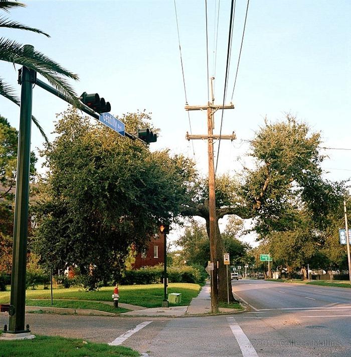 urban-forest (1)