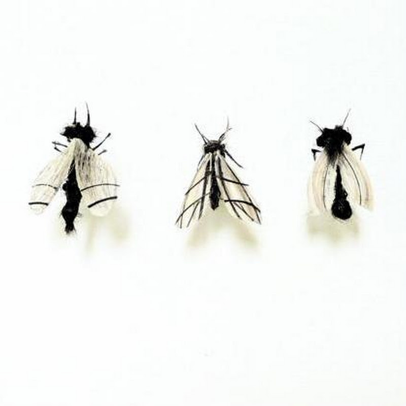 Adrienne Antonson Makes Insects Out of Human Hair