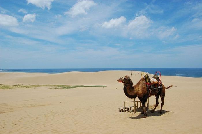 tottori-sand-dunes1