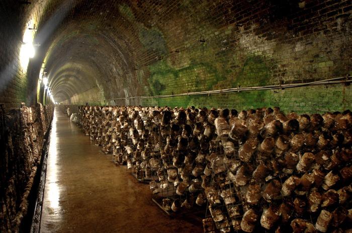 mushroom-tunnel8