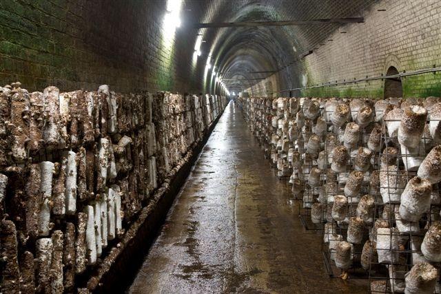 mushroom-tunnel7