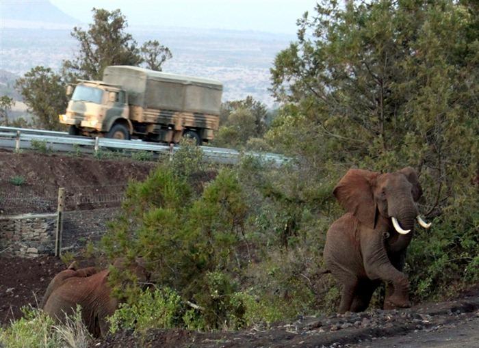elephant-underpass4