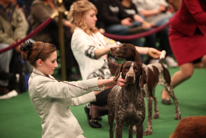 westminister-dog-show-2011001