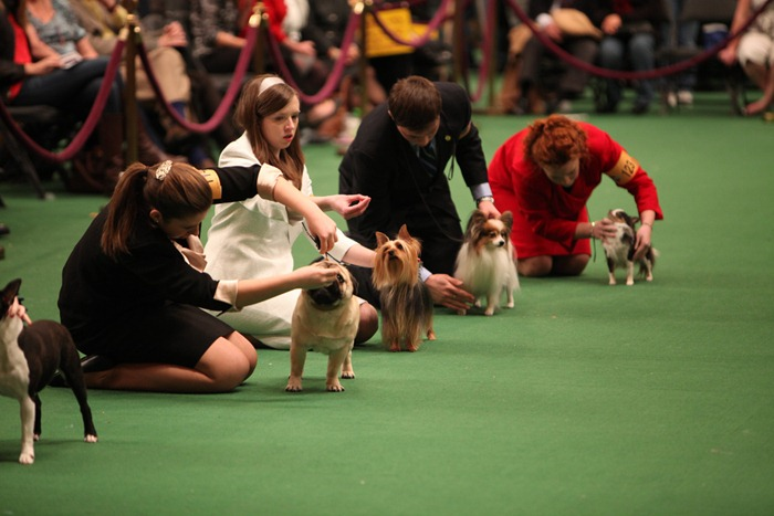 westminister-dog-show-2011004