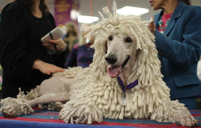 westminister-dog-show-2011007