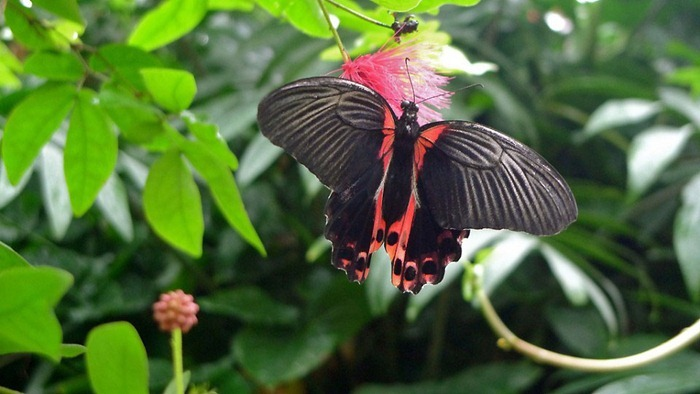 butterfly-exhibition8