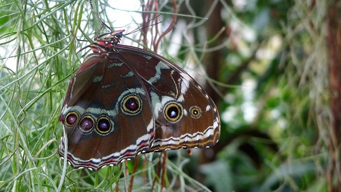 butterfly-exhibition5