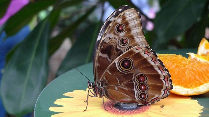 butterfly-exhibition12