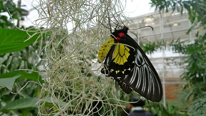 butterfly-exhibition13