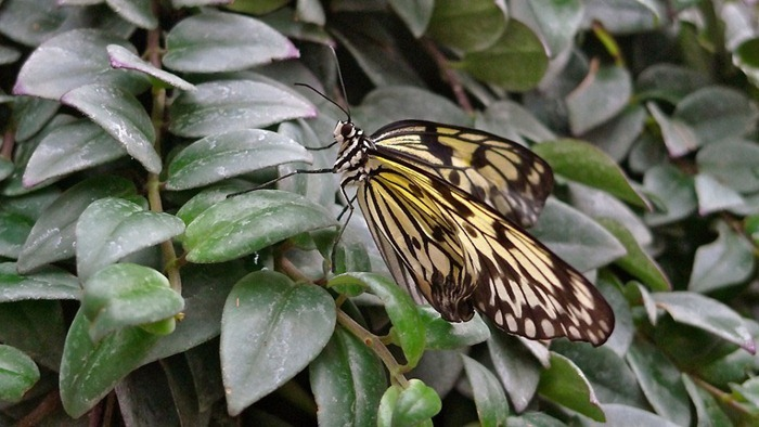 butterfly-exhibition16