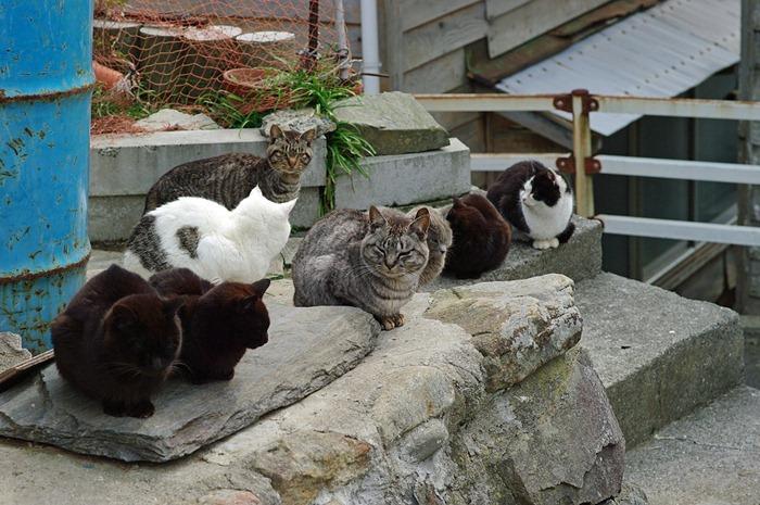 cat-island12