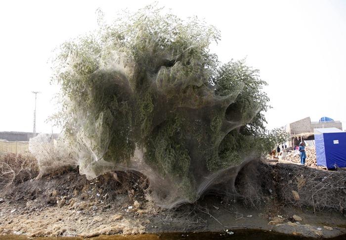 tree-cocoons2