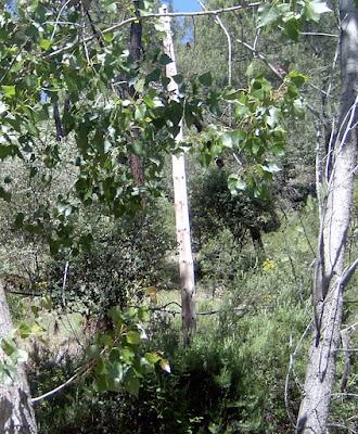 Soporte ¿de teléfono? caido a un palmo del suelo en la nacional 420 entre Carboneras y Cañete