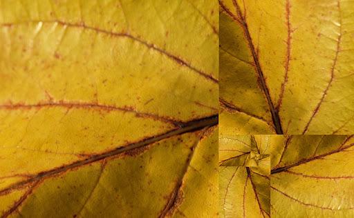 Vos plus belles photos du mois de janvier 2010 12oct-lestermeur-1-fibo