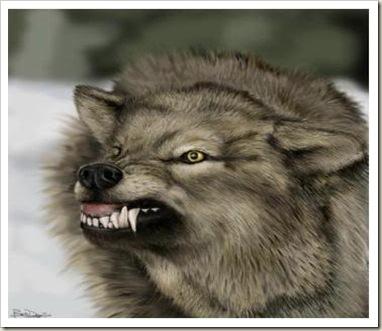 lobo atacando