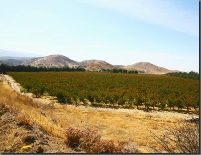 Orchard web