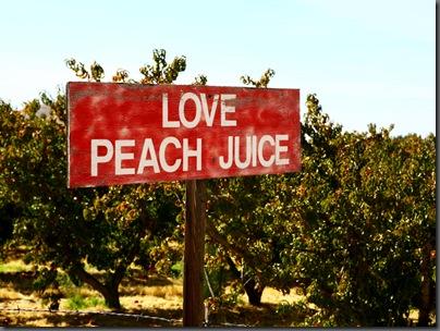Peach Sign web