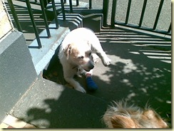 Monty and the blue bandage (1)