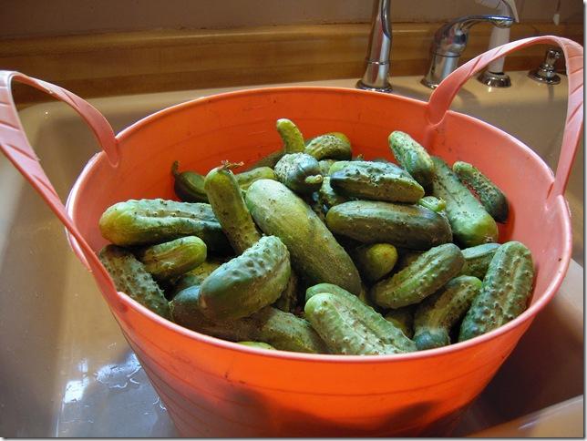 pickles 009