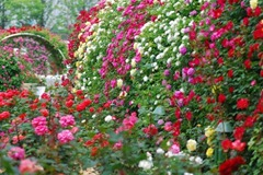 rose-garden-main