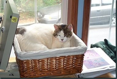 sleeping basket
