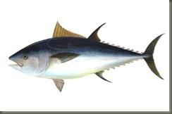 ikan tuna termahal