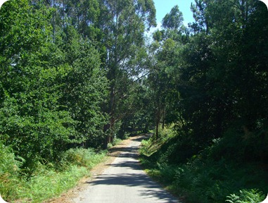 Estrada cortando o bosque