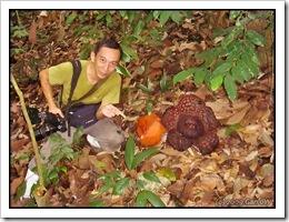 Rafflesia cantleyi-MyGopeng_20090628_2805-480