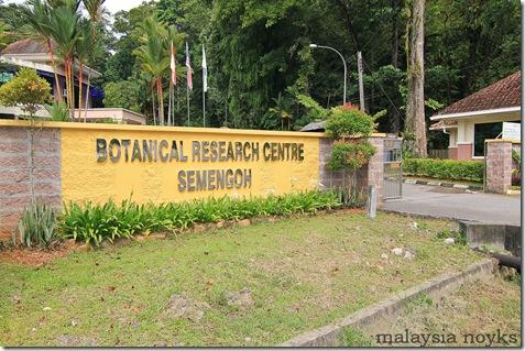 Semengoh Orangutan Rehabilitation Center 25