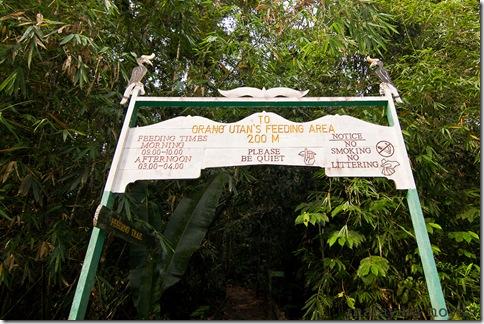 Semengoh Orangutan Rehabilitation Center 29