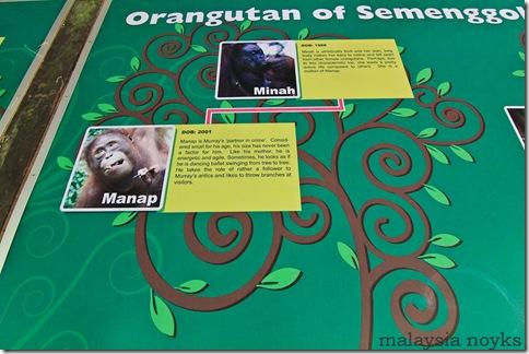 Semengoh Orangutan Rehabilitation Center 19