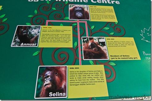 Semengoh Orangutan Rehabilitation Center 20