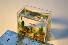 smallest-aquarium-003
