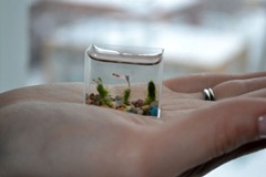smallest-aquarium-004