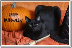 SPCA issues Halloween safety tips for cats