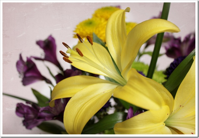 yellow-lily-sweettart