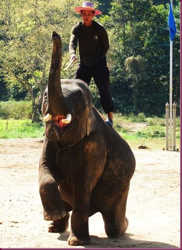 mae taeng elephant park tricks