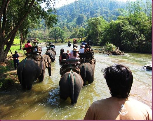 mae taeng elephant park elephant ride
