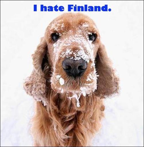 Adina1-Finland-Dog