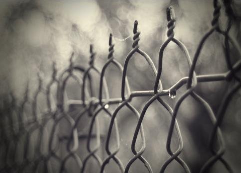 foggyfenceVNews-2011-01-8-15-07.jpg