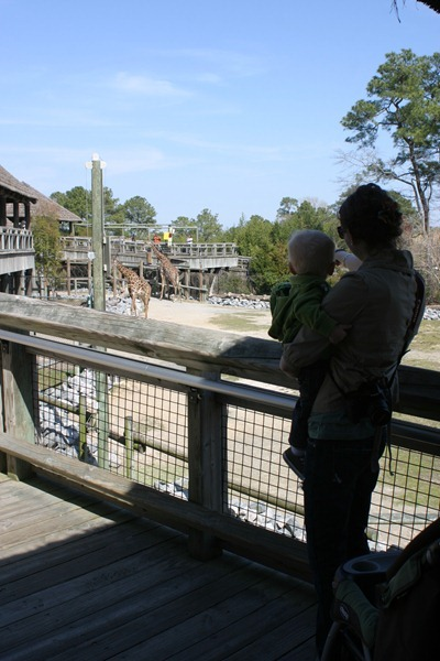 Virginia Zoo - 15