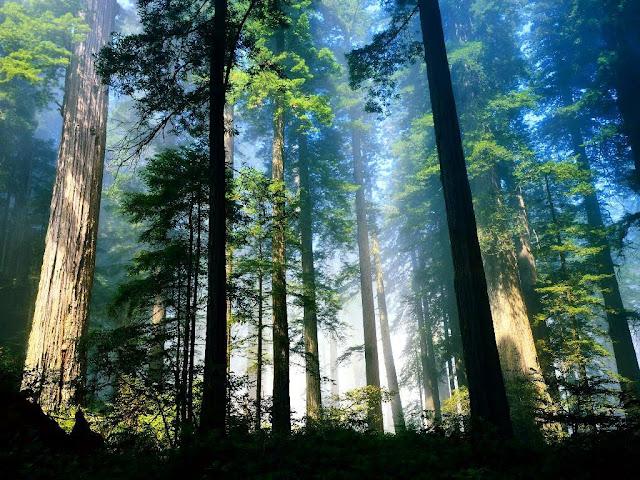 http://lh3.ggpht.com/_b3yKgD1XOt0/S8sRDqRNKNI/AAAAAAAACvE/YsePZKDjXx4/s640/floresta%20linda.jpg