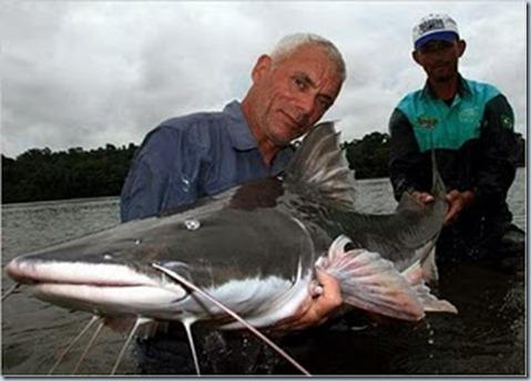 piraiba-catfish