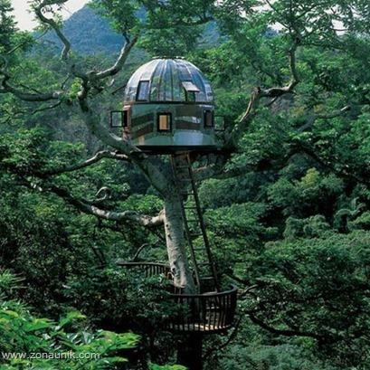 Rumah pohon (13)