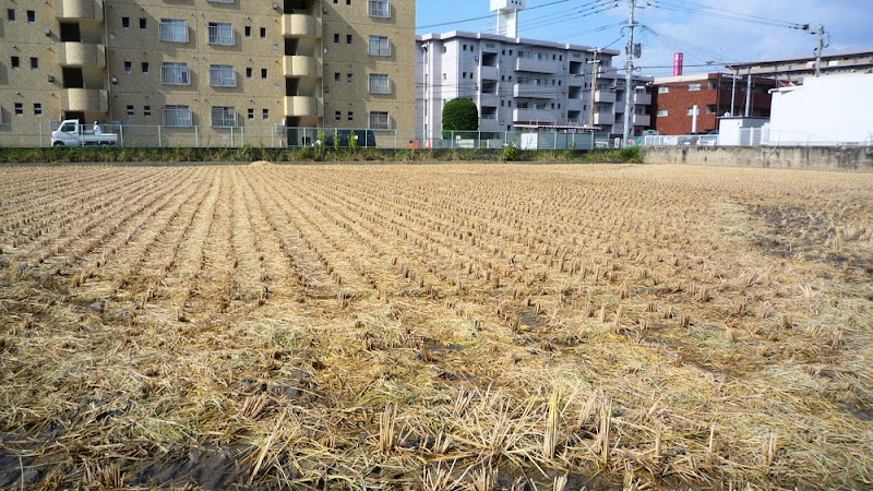 Cosecha 2010 収穫 Harvest