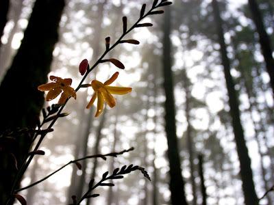 Orange Flower, Point Reyes