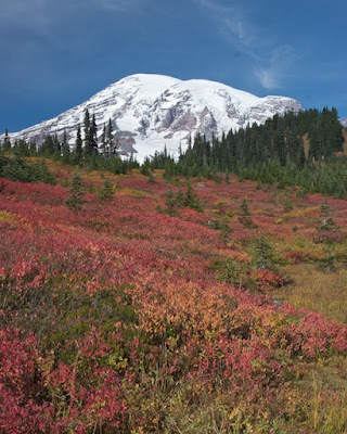 Fall in Paradise, Mount Rainier