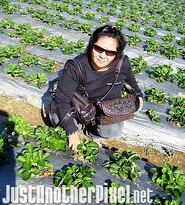Tita Beth picking strawberries - I love her sunglasses! - JustAnotherPixel.net